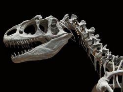 Dinossauro Alossauro Esqueleto